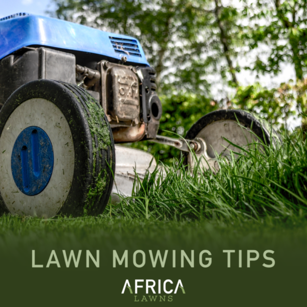 Africa_Lawns_Mowing_Tips-e1515591527550