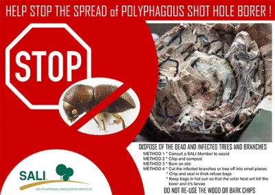 Shot hole borer invasion:  SALI posters for distribution
