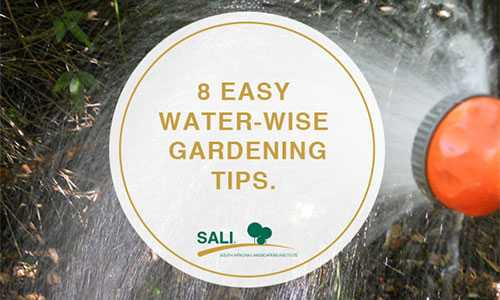 8 Easy to Follow Water Wise Gardening Tips