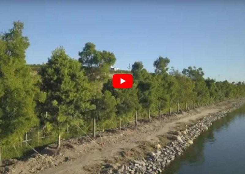 VIDEO: Great Green Wall of Trees in Stellenbosch